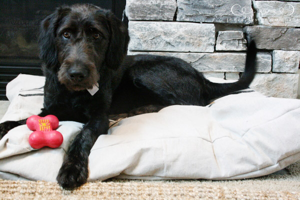 drop-cloth-dog-bed-for-atlas