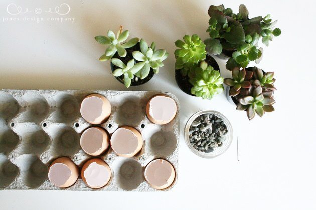 planting-succulents-in-eggs-supplies
