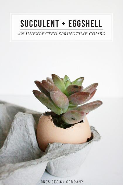 Try this unexpected springtime arrangement: plant a succulent in an eggshell / jones design company